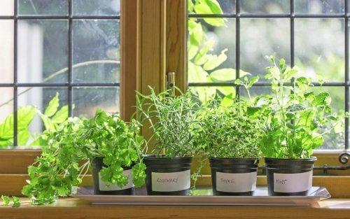 garten auf der fensterbank was im indoor garten angebaut werden kann. Black Bedroom Furniture Sets. Home Design Ideas