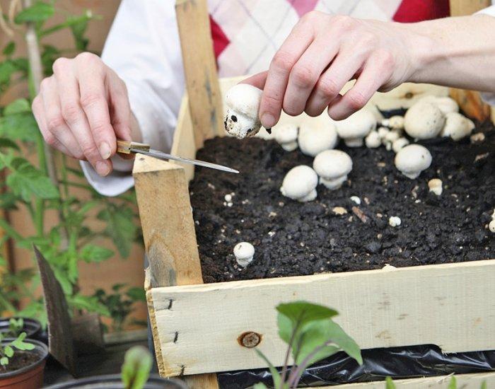 Bild 8 indoor garten pilze innen anpflanzen - Indoor garten ...