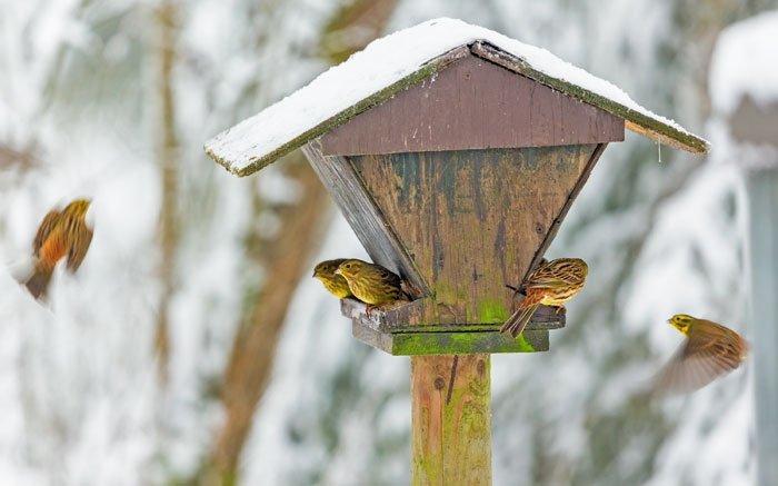 Bild 4 Vogelfutter Selber Machen Feines Im Vogelhauschen