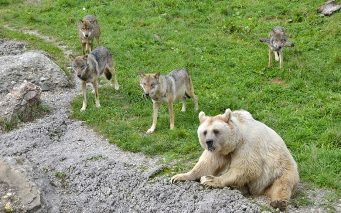 selfridges black friday manchester vendo alaskan malamute cuccioli