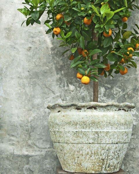 mediterranen garten anlegen diese pflanzen und deko. Black Bedroom Furniture Sets. Home Design Ideas