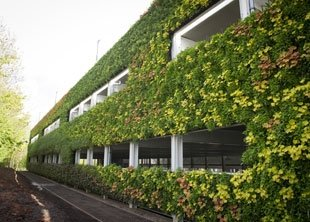 Pflanzenreich entsteht mitten in der Stadt durch grüne Wand