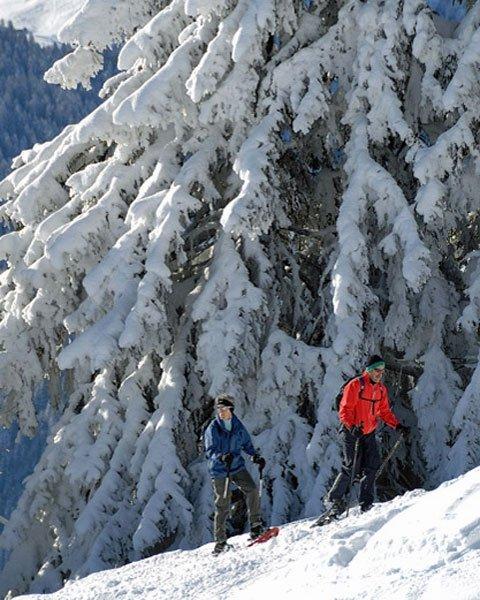 Schneeschuhlaufen: Auf verschneiten Pfaden in der Mythenregion