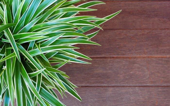 pflegeleichte zimmerpflanzen bilder