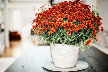 Diese Zimmerpflanzen reinigen die Luft in ihren vier Wänden