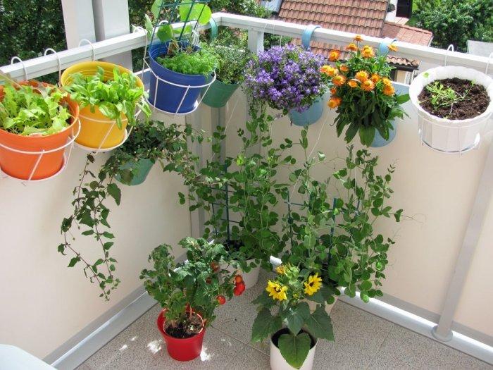 Bild: 4 - Halterungen für Töpfe im Kräutergarten am Balkon