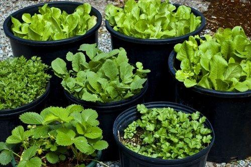Für Garten und Balkon: Ganz einfach Erdbeeren selber pflanzen