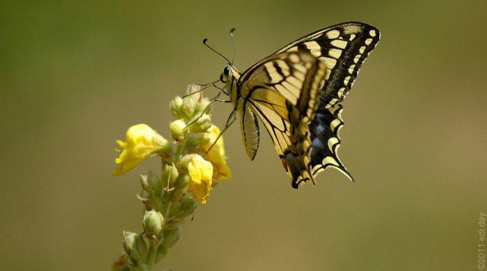 Biodiversität: Sc...