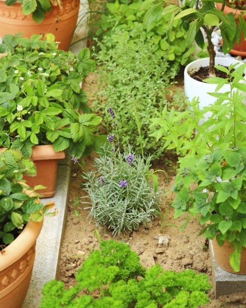 Pflegeleichten Garten Anlegen Und Genießen : Sie trotzdem einen schönen und vielfältigen Kräutergarten anlegen