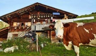 Region Bern: Bio-Bauernhöfe als Einkaufs- und Ausflugsziel