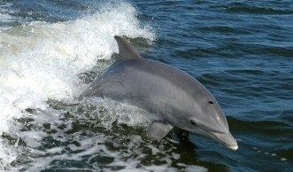 Keine Fortschritte in Japan: Grausame Jagd auf Delfine geht weiter