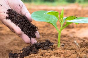 So boosten Sie Gemüsebeete mit natürlichem Dünger