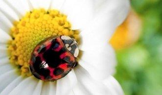 Invasive Arten: Wie fremde Tiere und Pflanzen unsere Umwelt stören