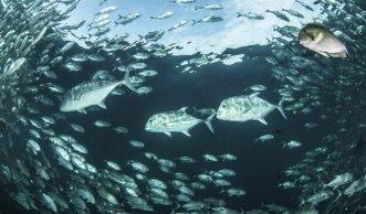 Abfall und Überfischung belastet das Meer