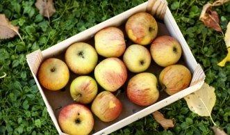 Wahre Multitalente: Die Vorzüge alter Apfelsorten & feine Rezepte