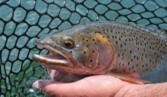 Aquakultur: Warum gesunder Fisch mehr als ein Bio-Siegel braucht
