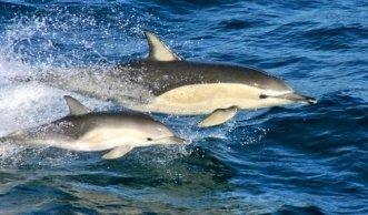Tatort Weltmeere: Zahl der bedrohten Fischarten steigt