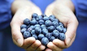 Beeren: Selbst angebaut schmecken sie am besten