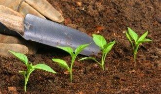 Der richtige Bio-Dünger für Gemüse und Obst