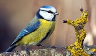 Biodiversität im Naturgarten: Tieren beim Überwintern helfen