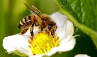 Wie Sie mit Nützlingen den Biogarten und die Artenvielfalt schützen