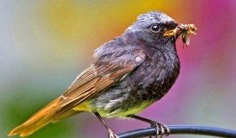 Einheimische Vogelarten in der Schweiz und ihre Lebensräume