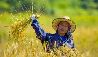 Fairtrade: Fair einkaufen hilft Bauern und Natur