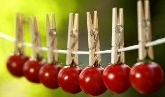 Leckere getrocknete Tomaten - ganz einfach selbst gemacht