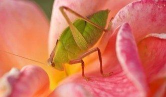 Hausmittel gegen Blattläuse: Natürliche Hilfe bei Schädlingsbefall