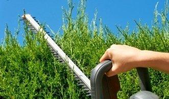 Was Sie beim richtigen Hecke schneiden alles beachten sollten