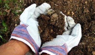 Humuserde ausbringen, damit Bäume und Sträucher besser wachsen