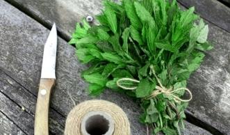 Wie Sie Kräuter haltbar machen und das Aroma lange erhalten