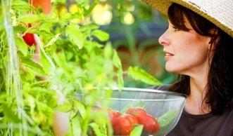 Bio-Lebensmittel aus dem eigenen Garten