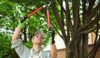 Ab Ende Oktober Sträucher und Bäume schneiden