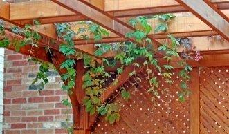 Pergola: Material und passende Pflanzen für den Schattenspender