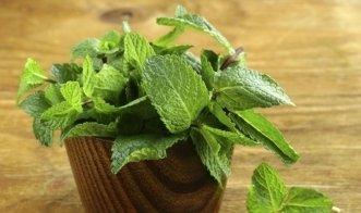 Pfefferminze aus dem Garten selber trocknen für feinen Tee