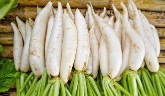 Rettich pflanzen: Würzige Wurzeln vom Garten frisch auf den Tisch