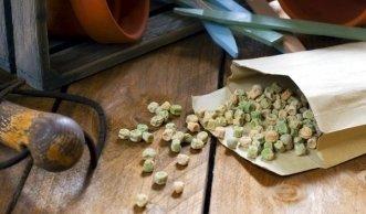 Samen zum Nulltarif: Saatgut gewinnen von Blumen, Obst und Gemüse