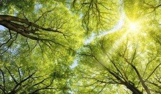 Warum Sie «Stolz auf Schweizer Holz» sein sollten