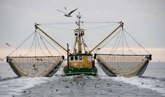 Leere Meere: Überfischung statt nachhaltiger Fischfang