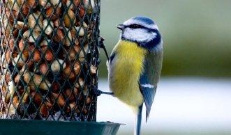 Vögel füttern im Winter: Ganz einfach Vogelfutter selber machen