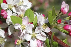 Natürliche Heilmittel: Bachblüten sollen die Psyche ins Gleichgewicht bringen