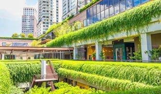 «Gebäude werden zu Bäumen, Städte zu Wäldern»