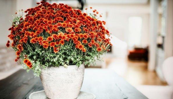 Luftreinigende Pflanzen: Diese 10 filtern Schadstoffe am besten