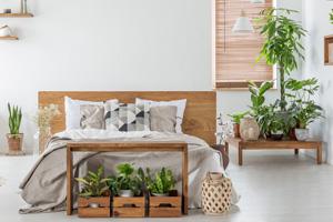 Diese Pflanzen sorgen für frische Luft im Schlafzimmer