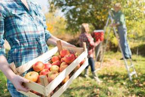 Deshalb sollte Hochstamm-Obst öfter in deinem Einkaufskorb landen