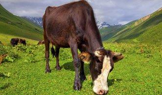 Fast jeder achte Landwirtschaftsbetrieb in der Schweiz ist Bio