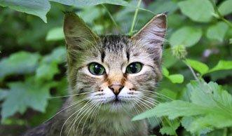Problem Hauskatze: Tierschützer warnen vor jagdfreudigen Büsis