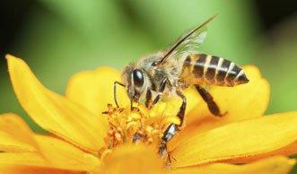 Milder Winter verschont Schweizer Bienen