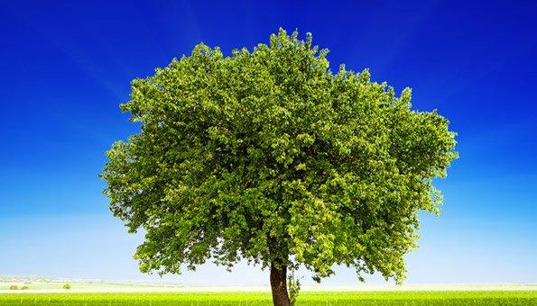 CO2-Kompensation Ihrer Webseite: Kostenlos
